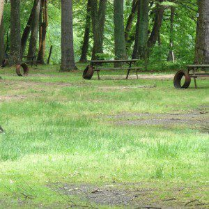 Thirsty Deer Section of sites at River Beach Campsites